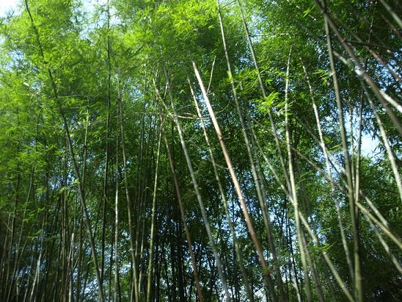 bamboohooo